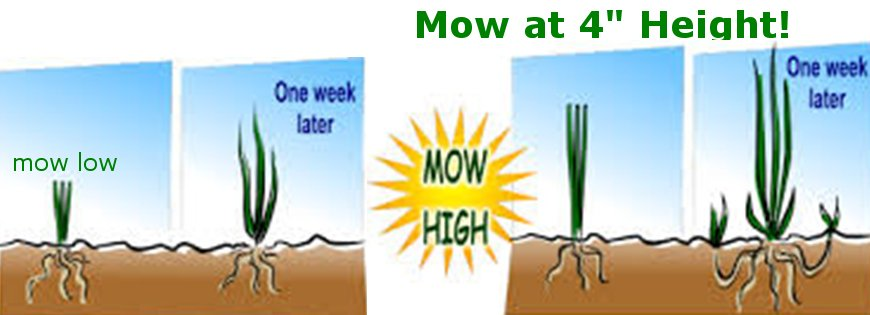 Mow high. ORGANIC LAWN CARE MINNESOTA by Landscape Dreams, Northfifeld, MN
